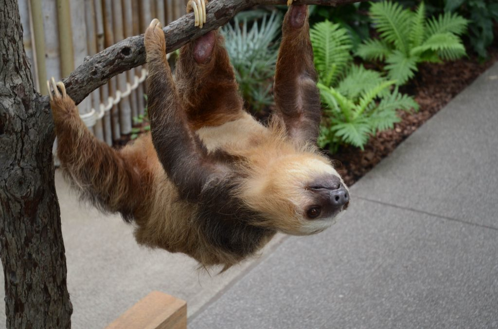 Coming This Weekend Sloths And Venomous Snakes At Indianapolis Zoo